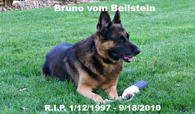 German Shepherd End of Life