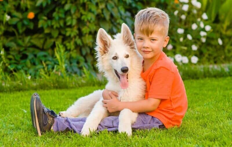 White German Shepherd with Boy