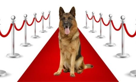 famous german shepherd dogs