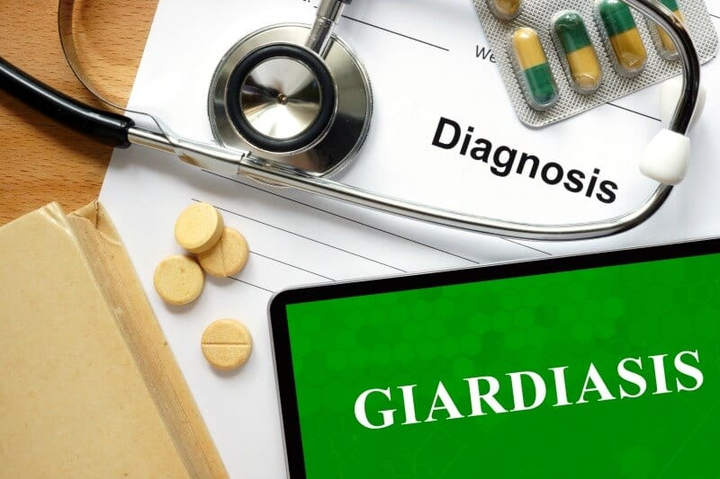 giardiasis vaccinations for dogs