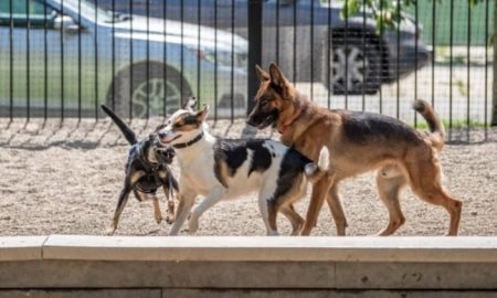 dogs at dog parks
