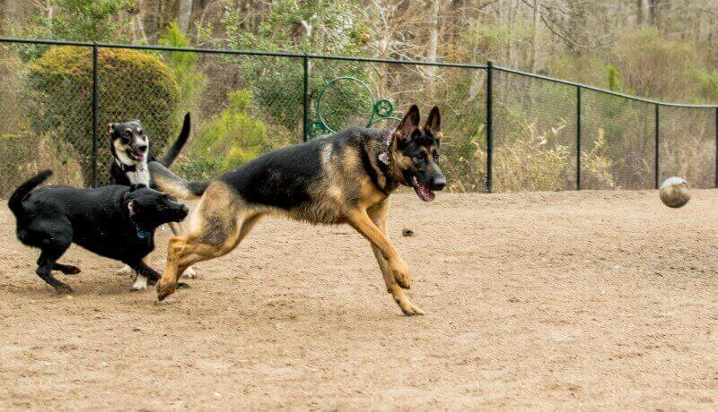 germanshepherdcountry.com