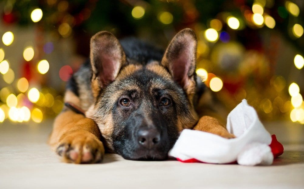 puppy proofing christmas