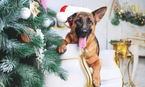 puppy proofing at christmas