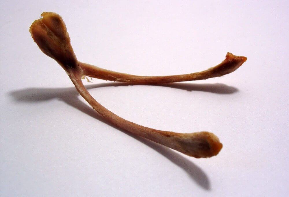 Turkey Wishbone
