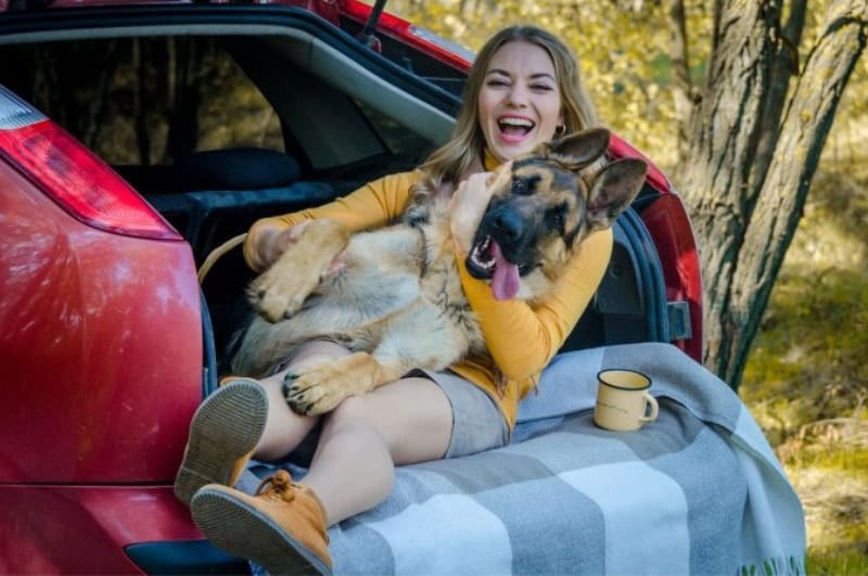 german shepherd and woman in car