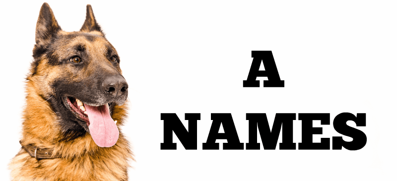 Dog Names starting with A