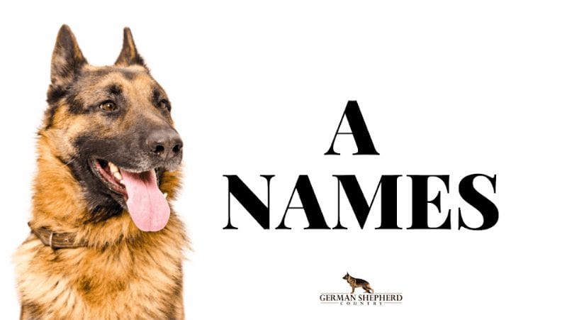 dog names that start with a