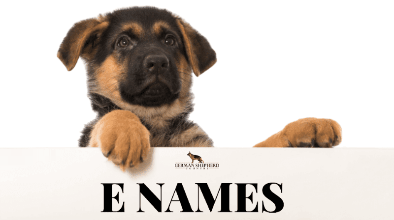 Dog Names: Biggest List of Dog Names | German Shepherd Country