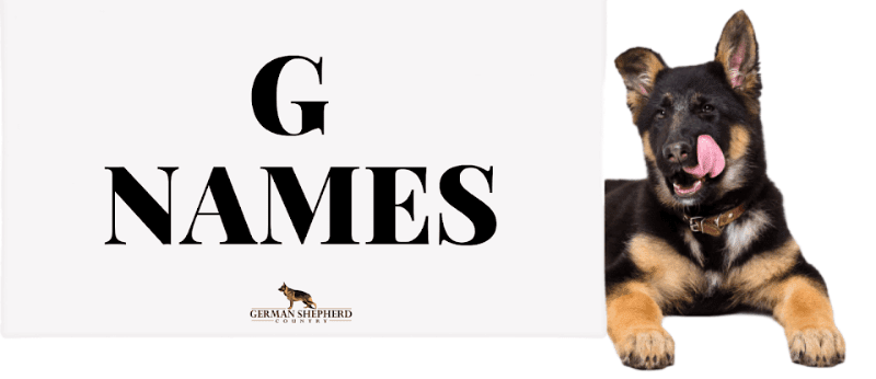 dog names that start with g