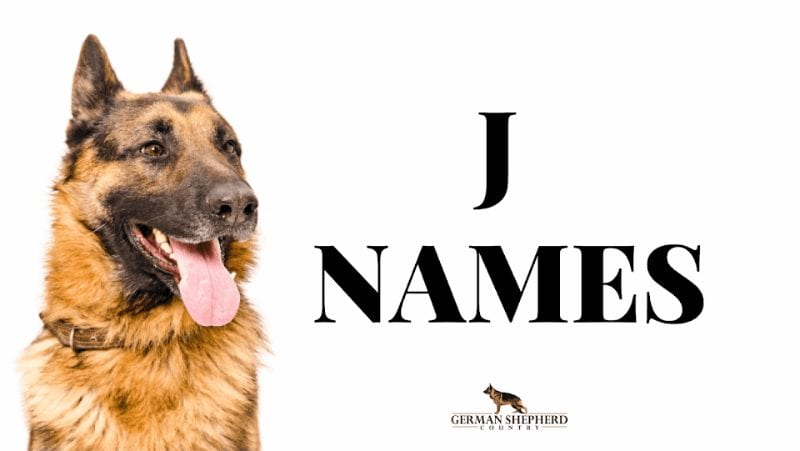 dog names that start with j