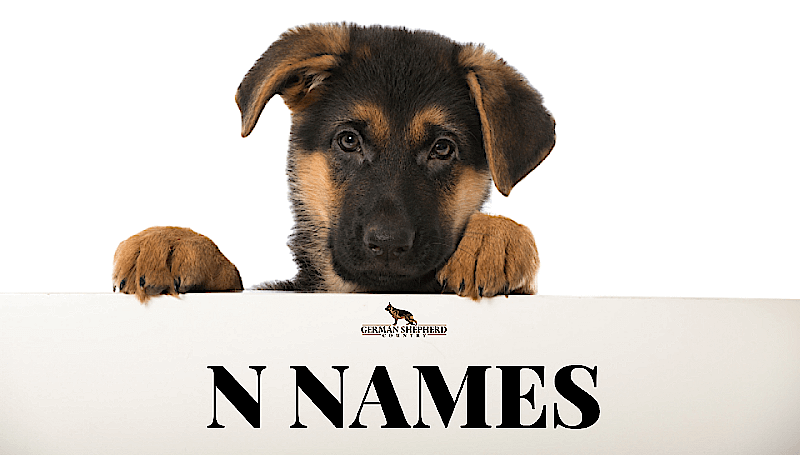 dog names that start with n