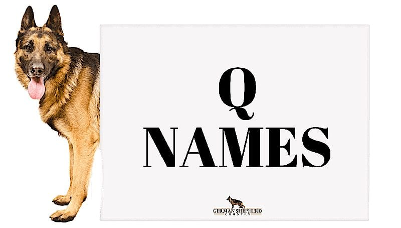 dog names that start with q