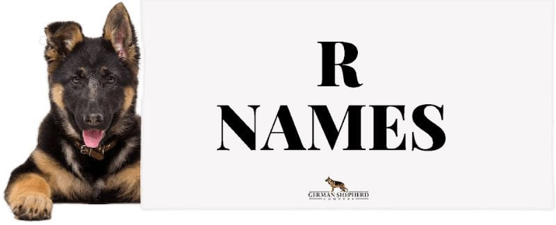 dog names that start with r