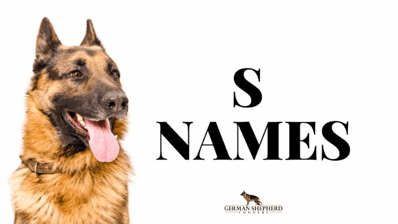 dog names that start with s