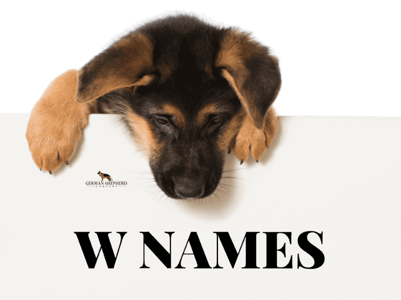 dog names that start with w