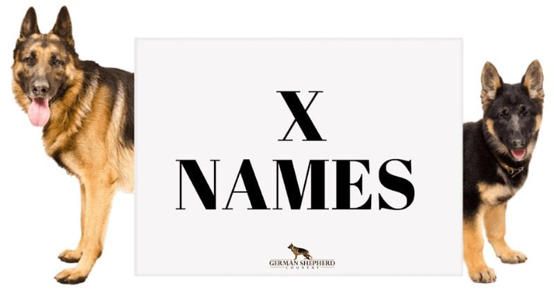 dog names that start with x