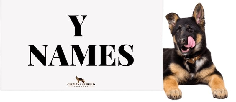 dog names that start with y