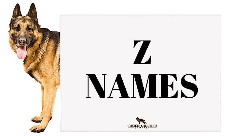 dog names that start with z