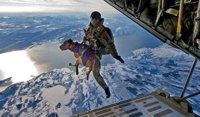 military dogs jumping out of planes