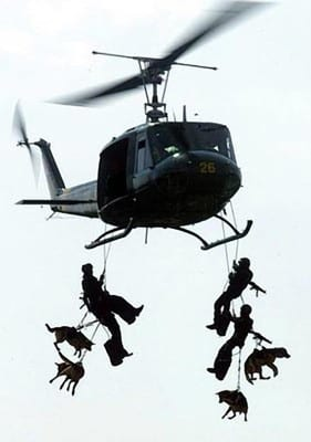 Navy Seal Dogs repelling from helicopter