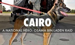 Belgian Malinois Cairo the War Dog