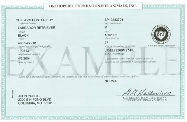 Orthopedic Foundation for Animals Certificate