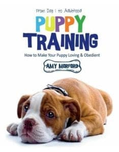 Puppy Training: From Dog to Adulthood