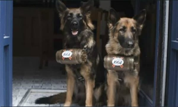 german shepherds serve Kronenbourg