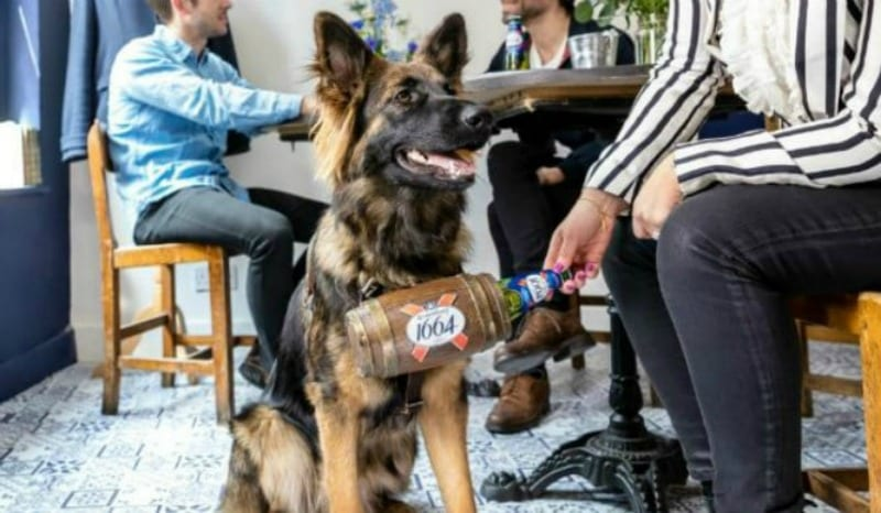 german shepherd serves beer