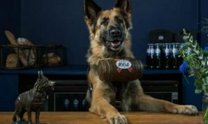 German Shepherds serve up cold brews