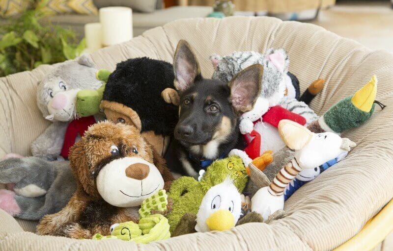German Shepherd Puppy with Toys