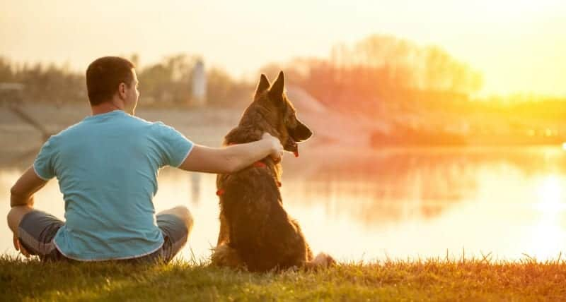 German Shepherd and Man Watching Sunset