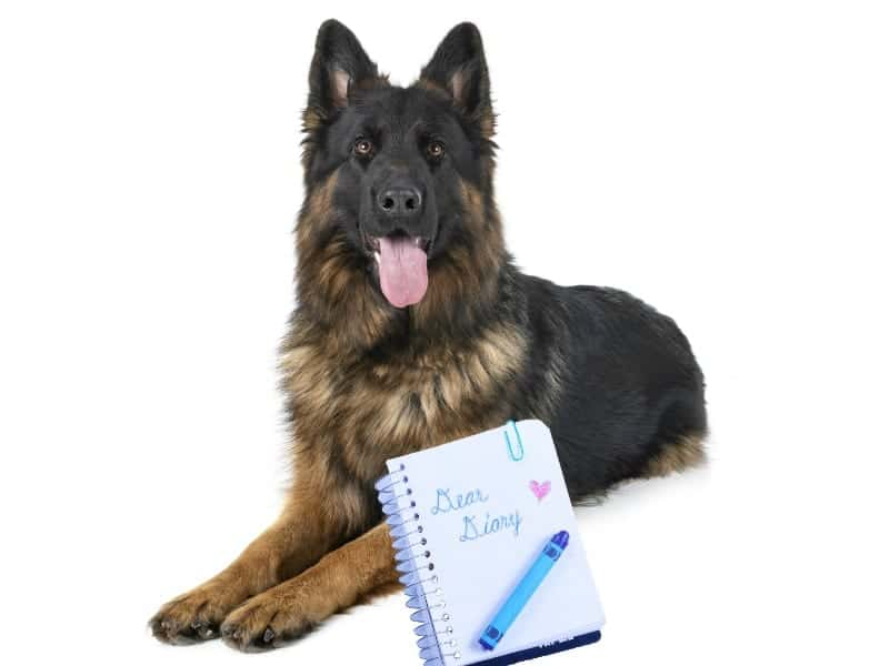 A long haired German Shepherd Dog with a notebook