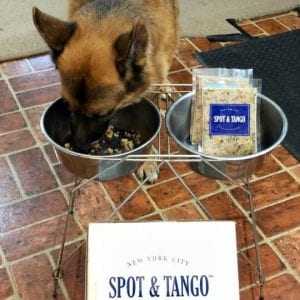 Spot and Tango Review German Shepherd Dog
