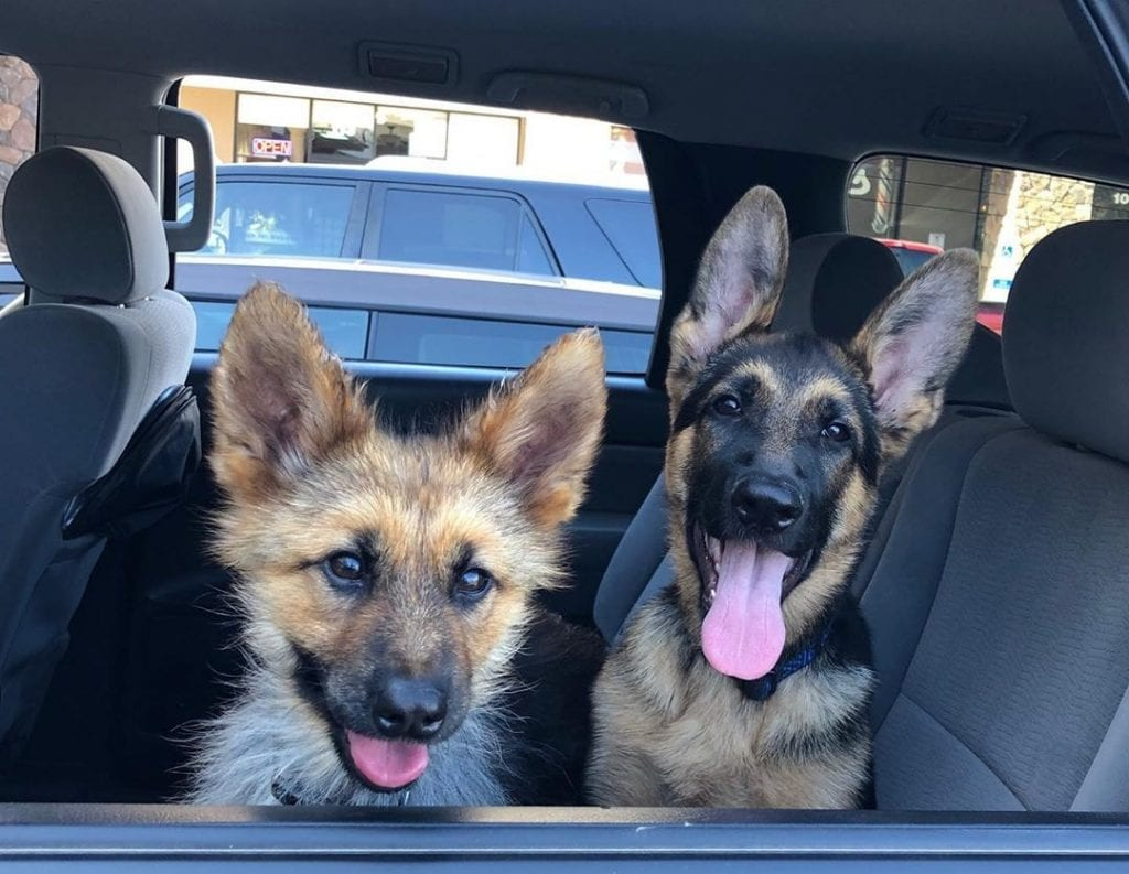 gsd has pituitary dwarfism