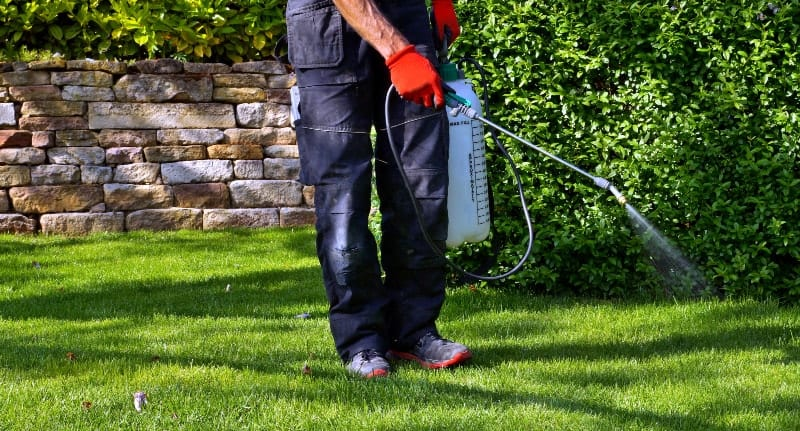 Spraying pesticides on lawn