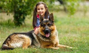 german shepherd with girl