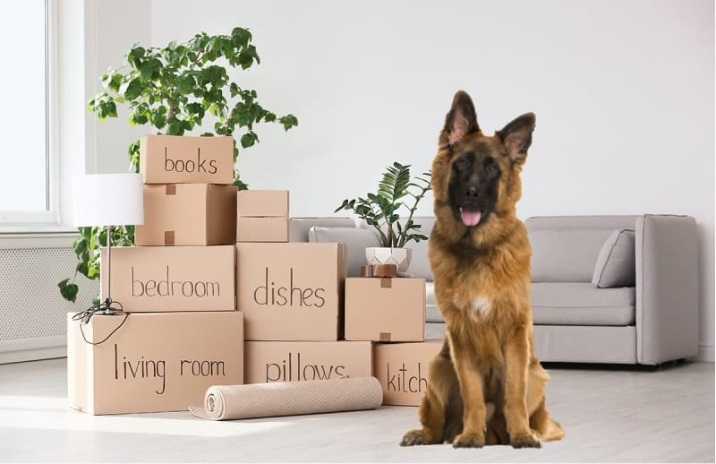 move your dog