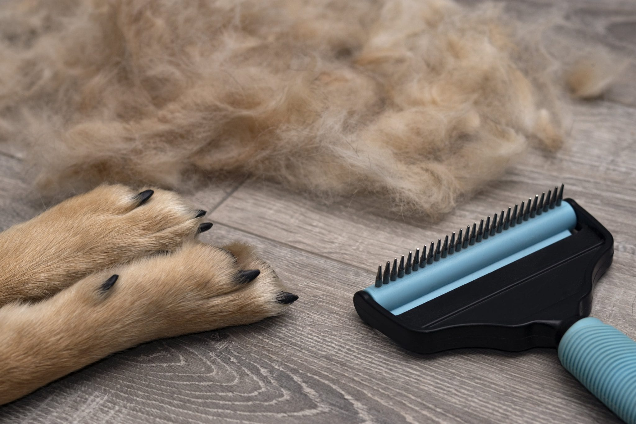 german shepherd hair