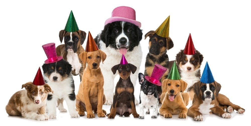 dog years and breeds