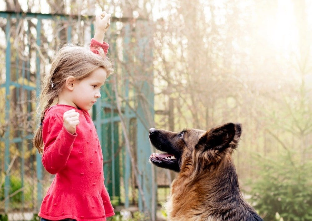 german shepherd and girl