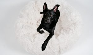 why dogs dig in beds